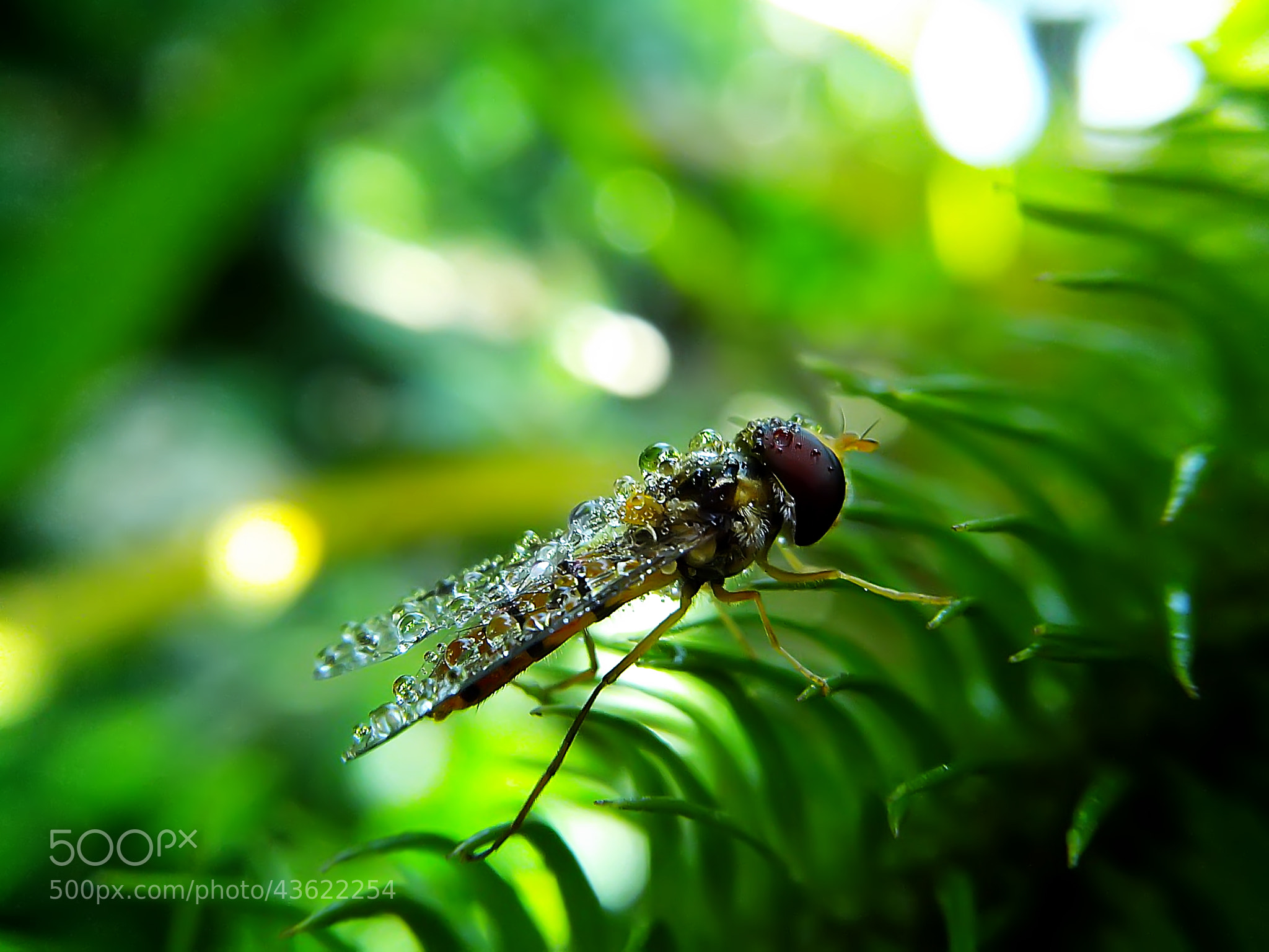 Photograph hoverfly by Hendrata Yoga Surya  on 500px