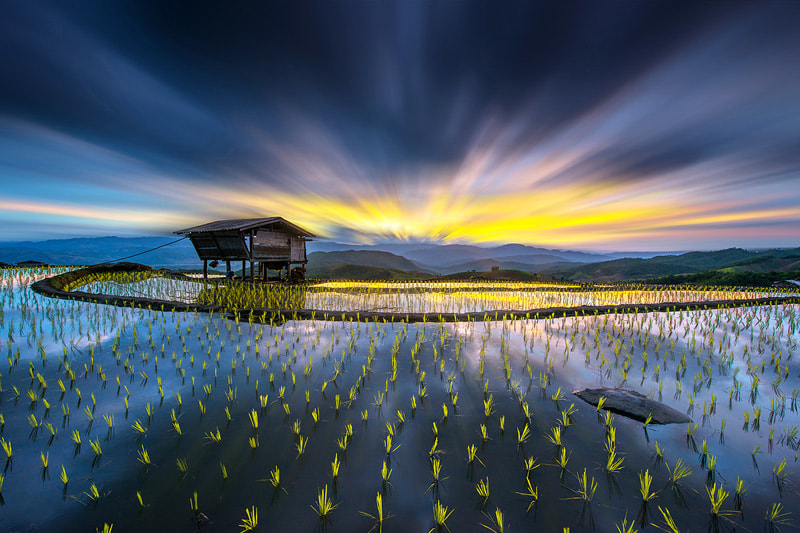 Photograph Light in rice. by sarawut Intarob on 500px