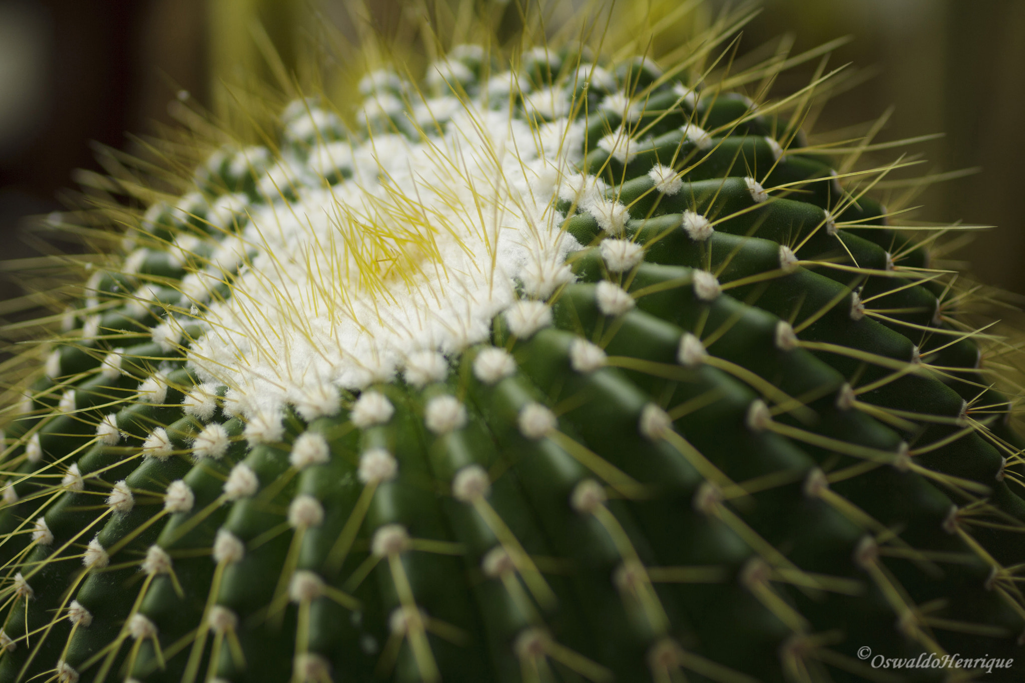 "Photograph Da série ""cactus"" - 25 by Oswaldo Henrique on 500px"