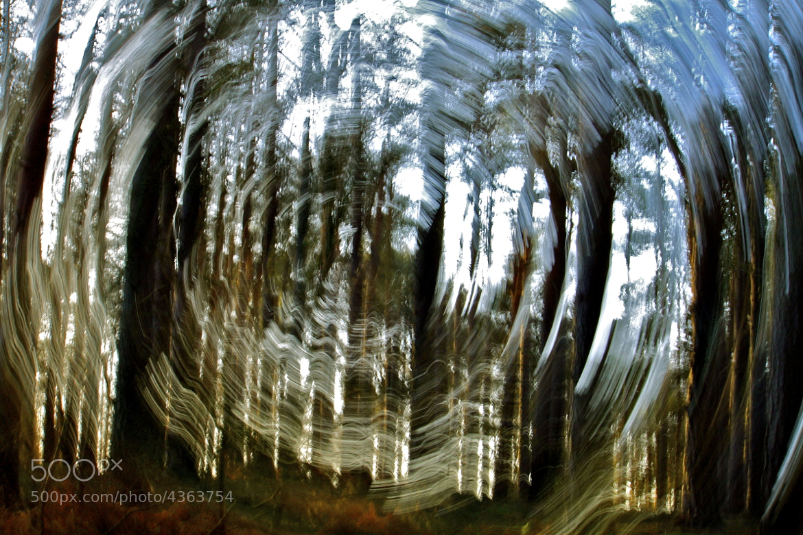 Photograph Tree Vortex 2 by Matthew Brown on 500px