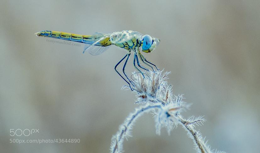 Photograph Las libélulas volaron al exilio by Tonymadrid  on 500px