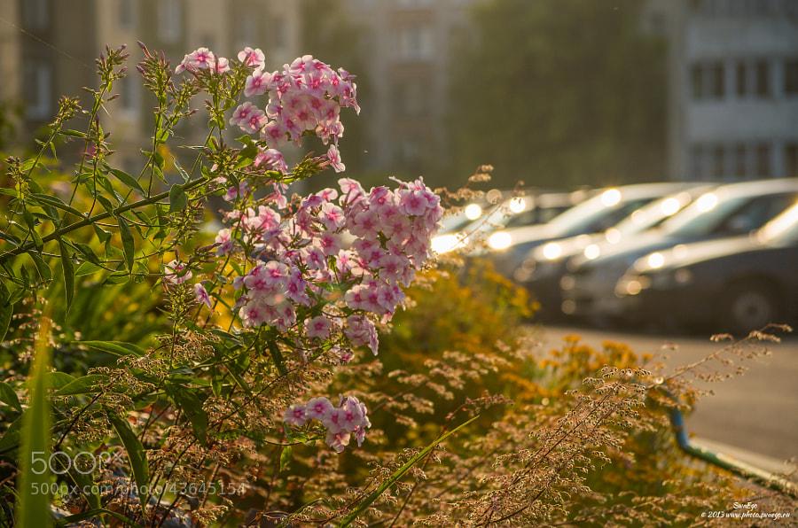 Pink by Tolik Maltsev on 500px.com