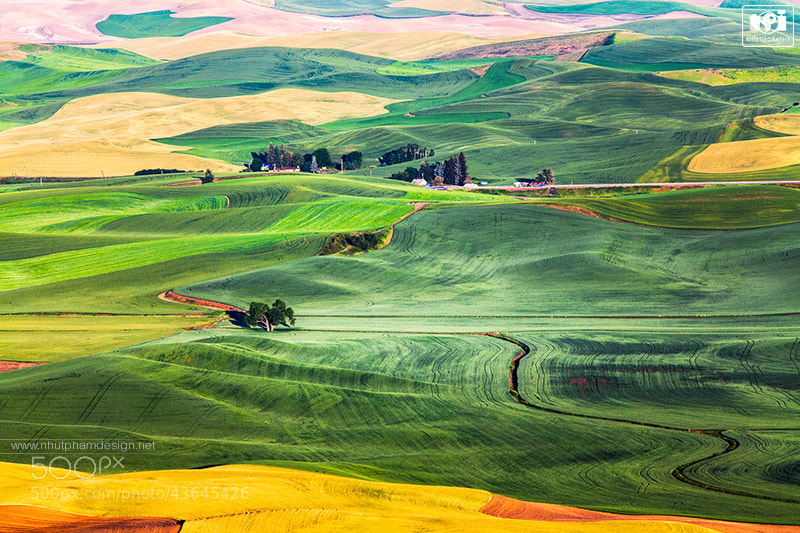 Photograph Palouse Carpet! by Nhut Pham on 500px