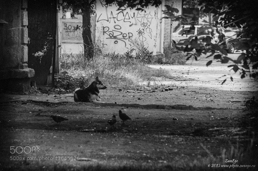 Homeless by Tolik Maltsev on 500px.com