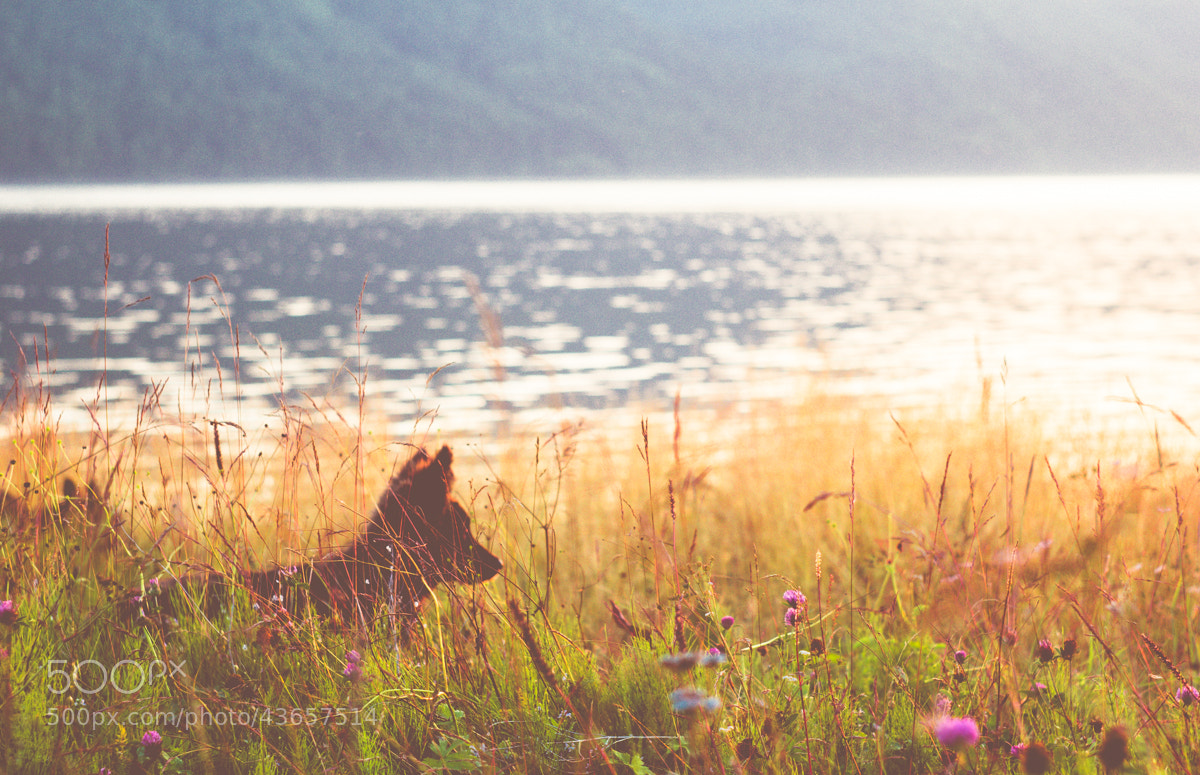 Photograph lovely (lens: helios 44m4 ) by Dima Ave on 500px