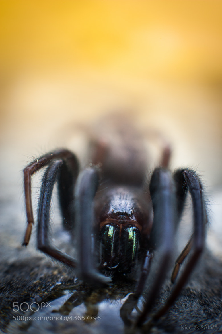 Photograph Mister Spider by Nicolas SALVA on 500px