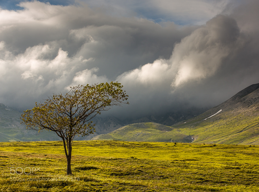 Photograph Lonely tree on Campo Imperatore by Hans Kruse on 500px
