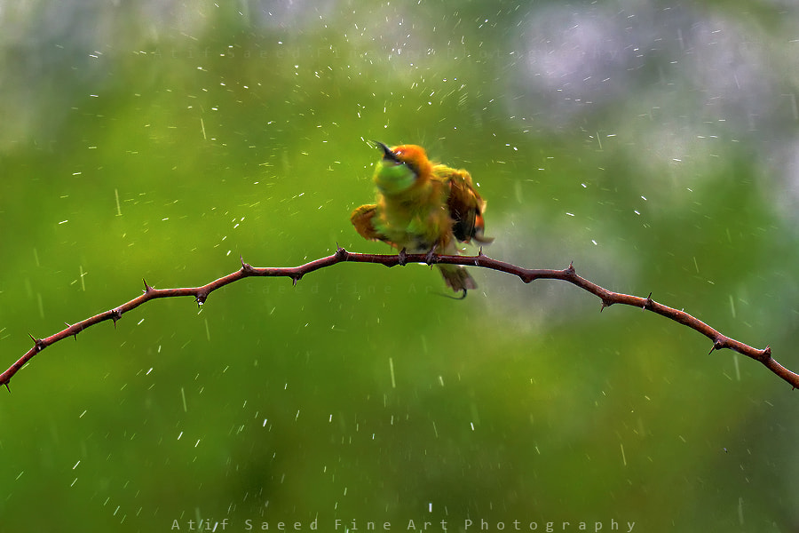Photograph wet.. by Atif Saeed on 500px