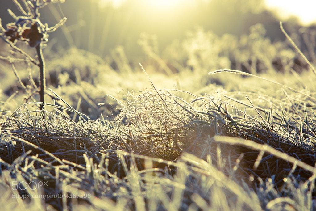 Photograph Frozen Planet by Matt Peters on 500px
