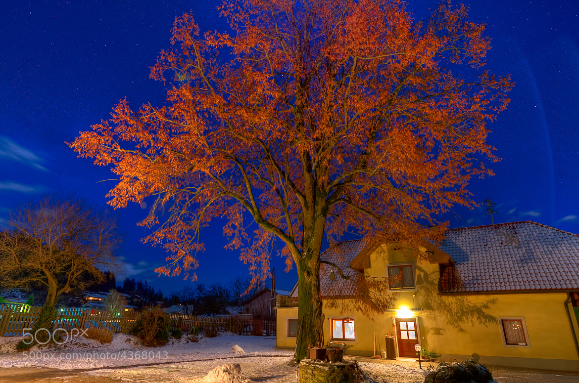 Photograph red tree by Paul Suess on 500px