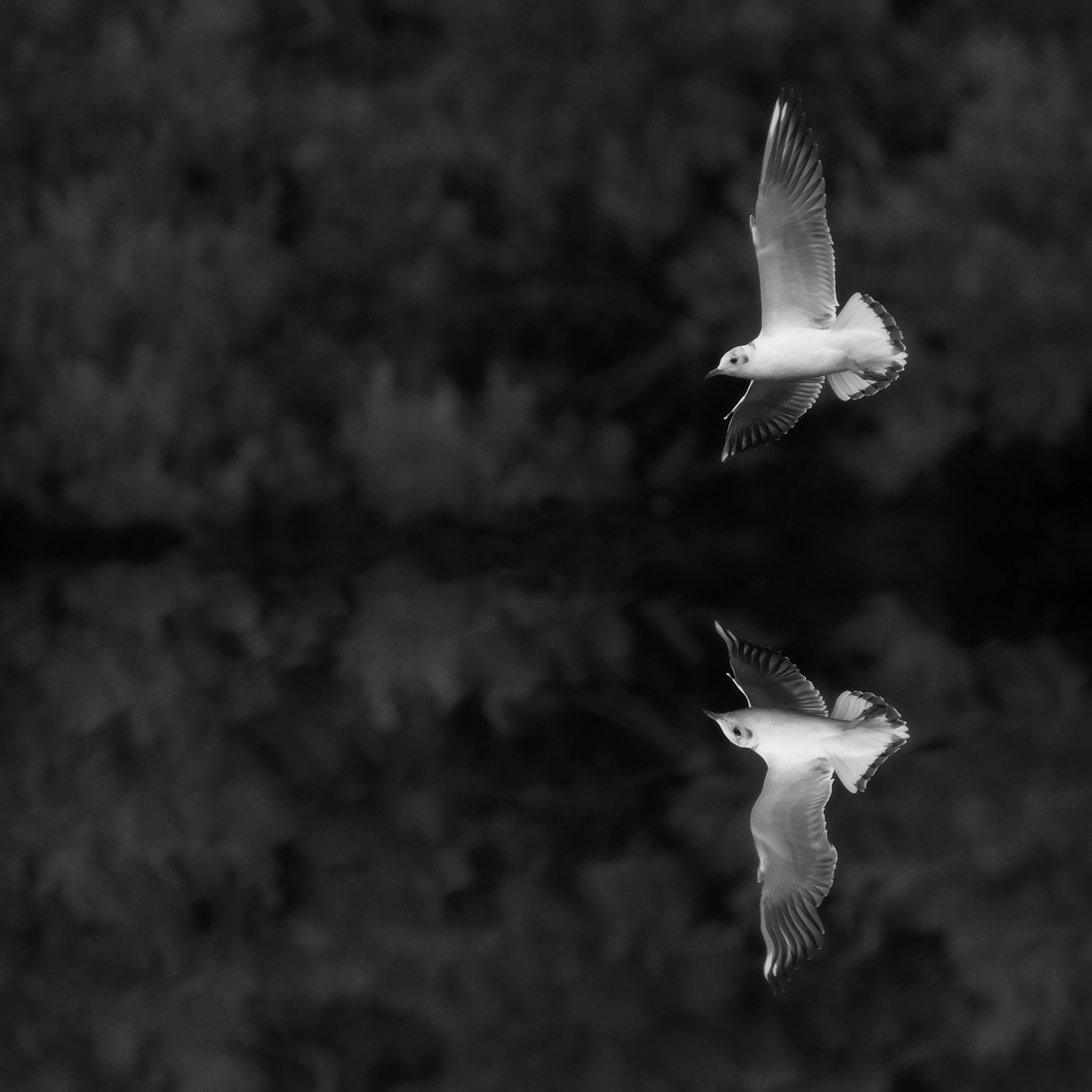 Photograph Magical gull by Didier B on 500px