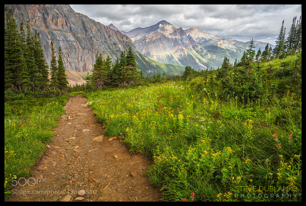 Photograph Wild Cavell Meadows by Steve Dublanko on 500px