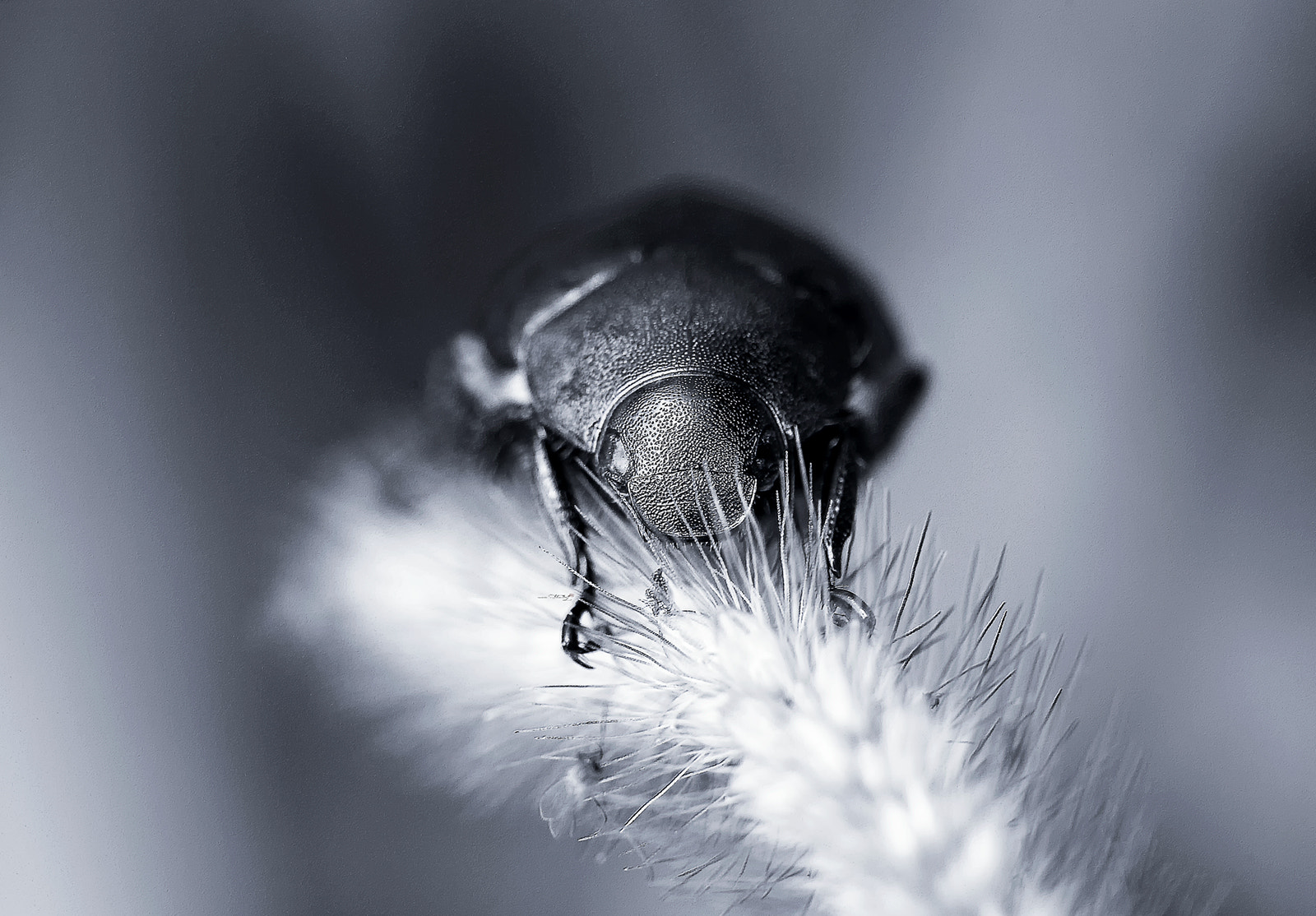 Photograph Chafer by Tony Lee on 500px