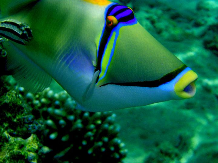 Photograph picasso-fish    red sea by gülnur  vural on 500px