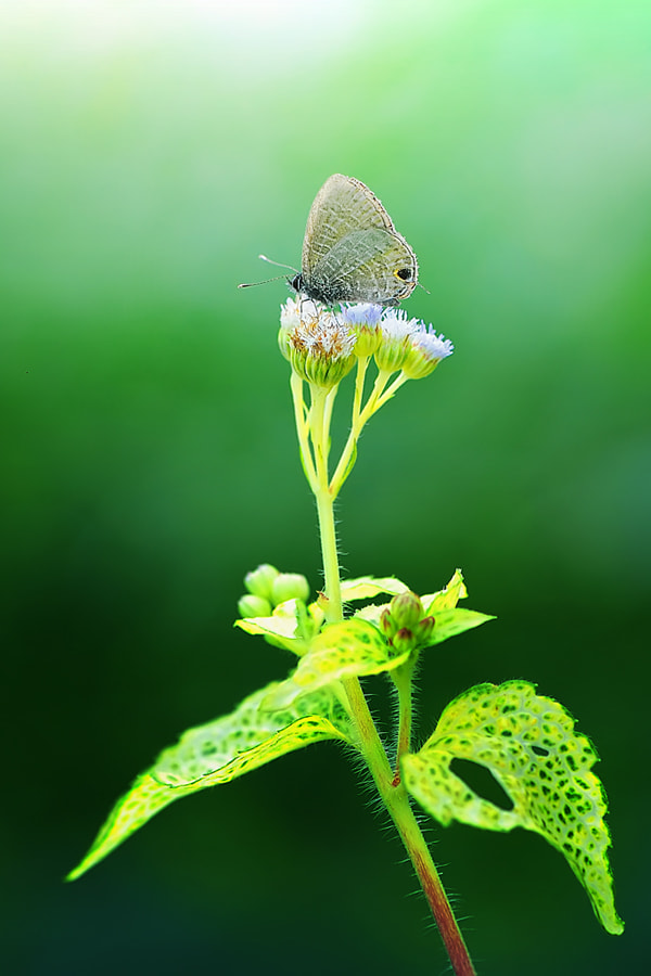 Photograph in the morning by Taufiq Hidayat on 500px