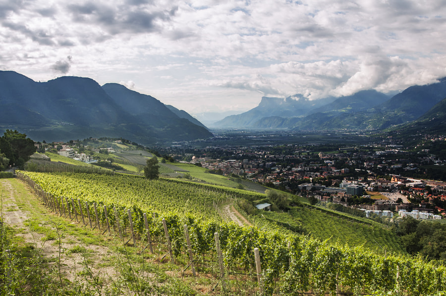 Photograph Wine hills by Maximilian Mair on 500px