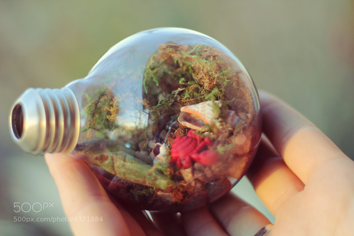 Photograph Light Bulb Terrarium by Renée Louise Anderson on 500px