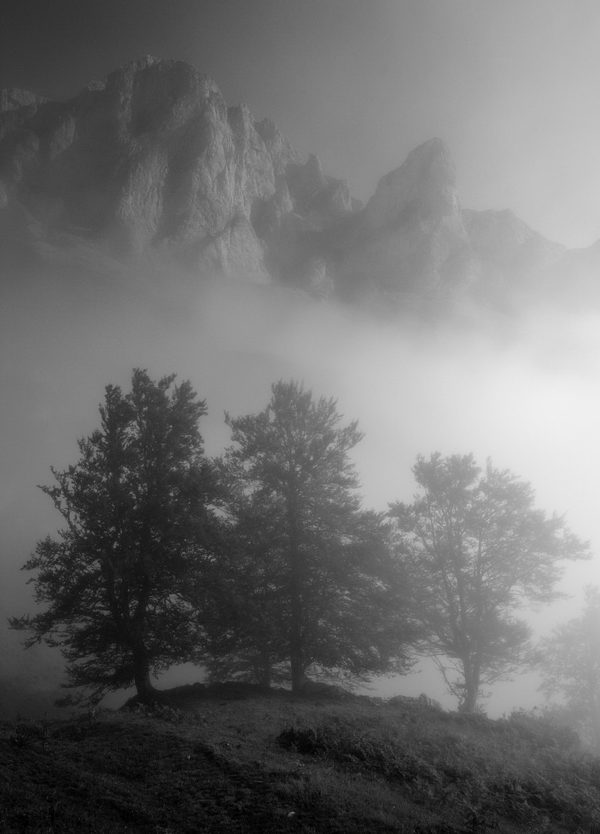 Photograph in the fog by Angel Diego on 500px