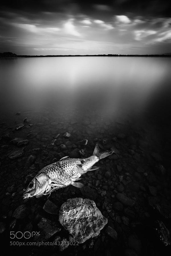 Photograph Desolation by Geoffrey Gilson on 500px