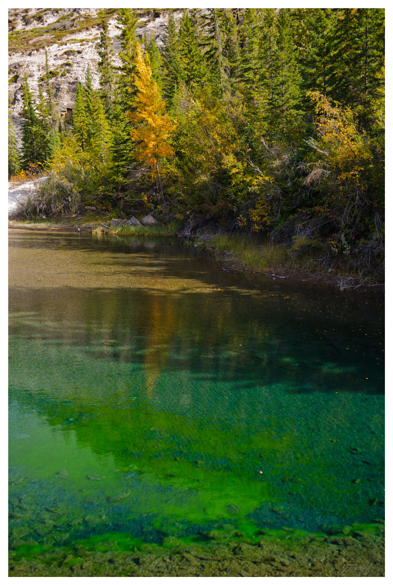 Photograph Pond in fall, Jasper National Park by Denby Jorgensen on 500px