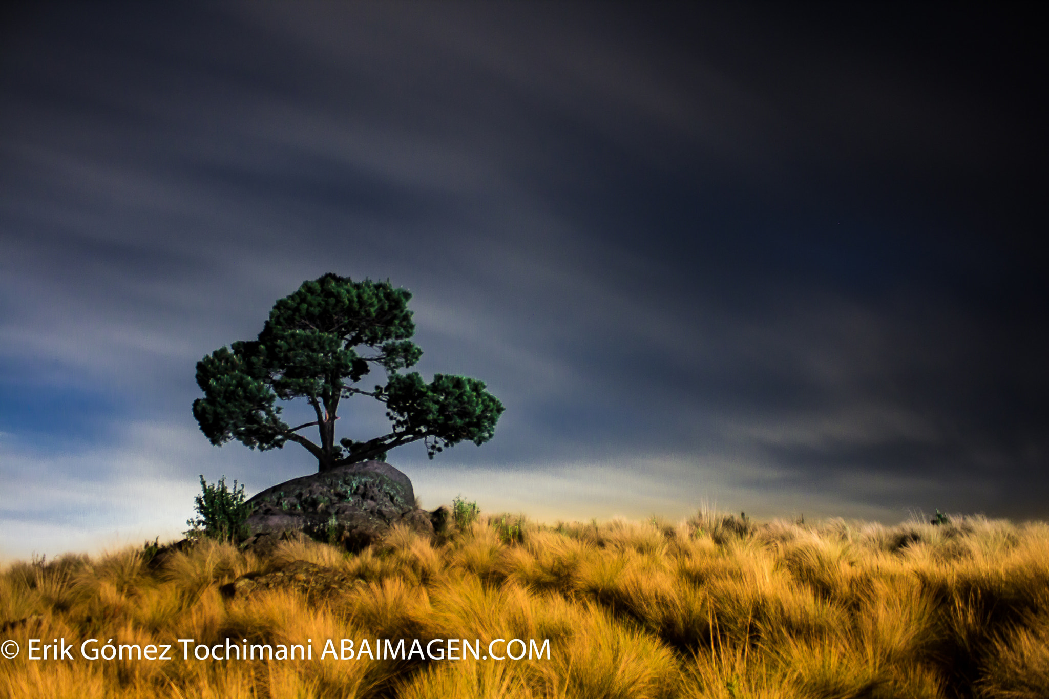 Photograph Tree in the nigth by Erik Gómez Tochimani on 500px