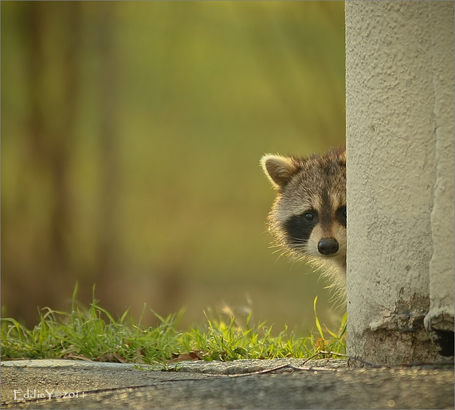 Photograph The Curious Peek by Eddie Yu on 500px