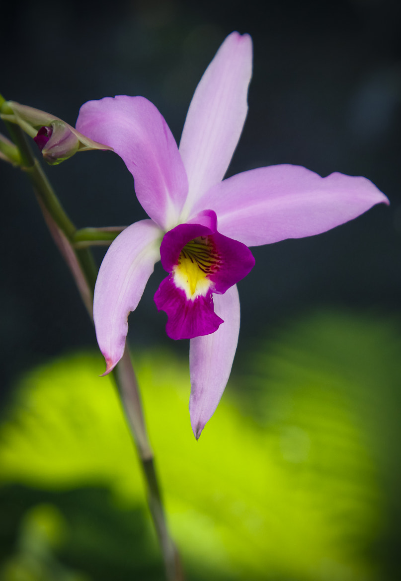 Photograph Orchid_002 by P. Larson  on 500px