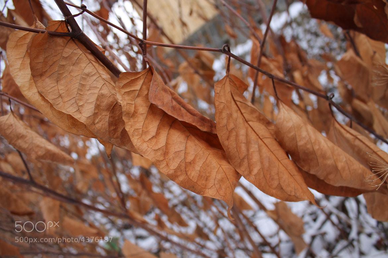 Photograph Dead leaf by Rausch Wilhelm Robert on 500px