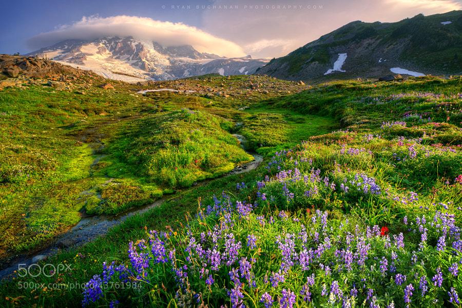 Photograph Paradise by Ryan Buchanan on 500px