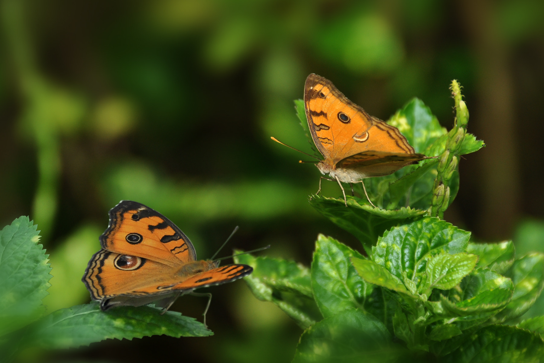 Photograph Butterflies Chatting by Khoo Boo Chuan on 500px