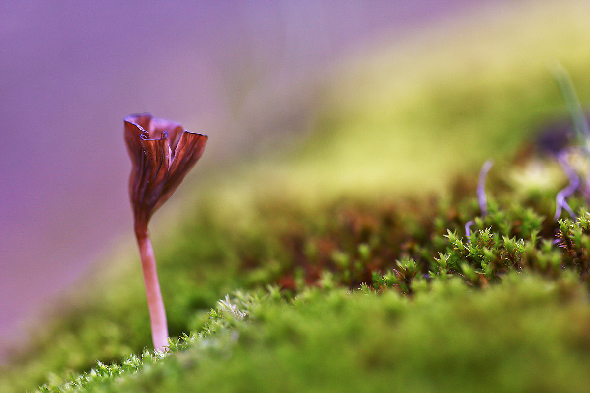 Photograph just a fungus by Tamara Kavalou on 500px