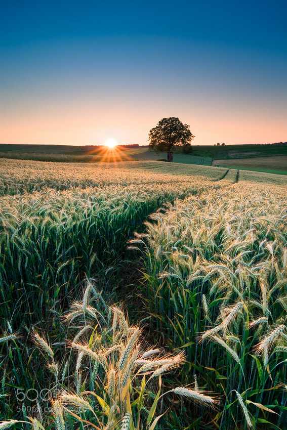 Photograph Harvest by Michael  Breitung on 500px