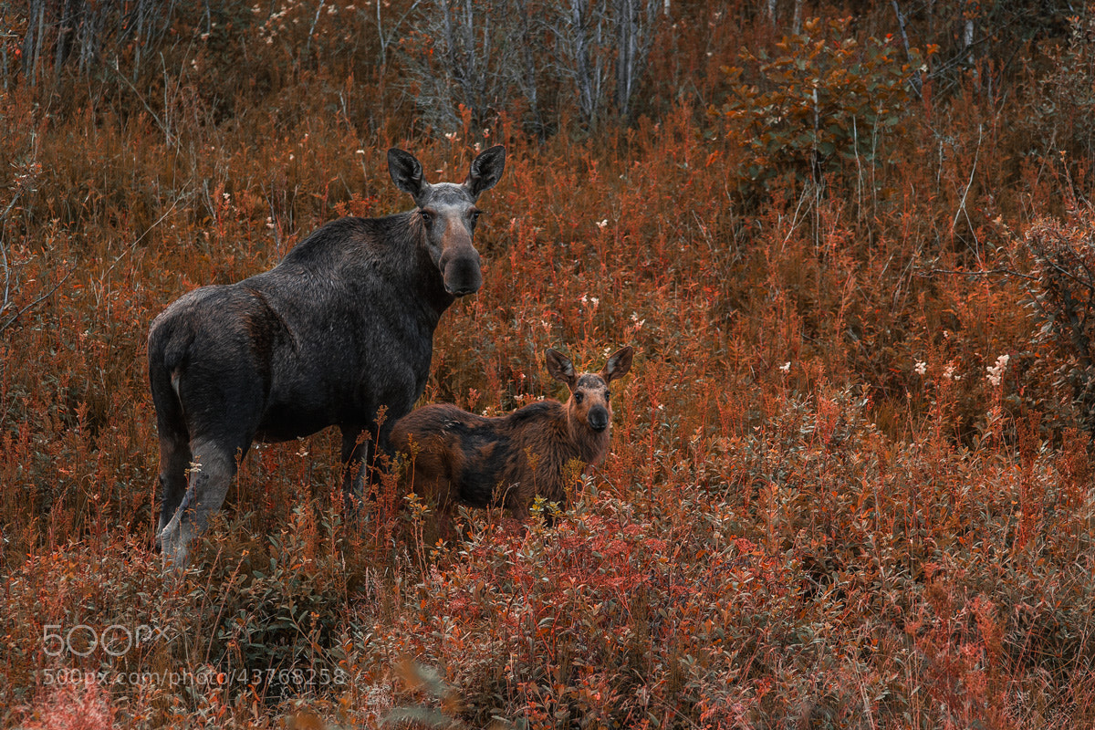 "Photograph ""Family"" by Janne Olkkonen on 500px"