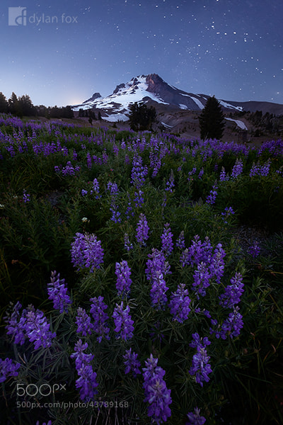 Photograph Mount Hood by Dylan Fox on 500px