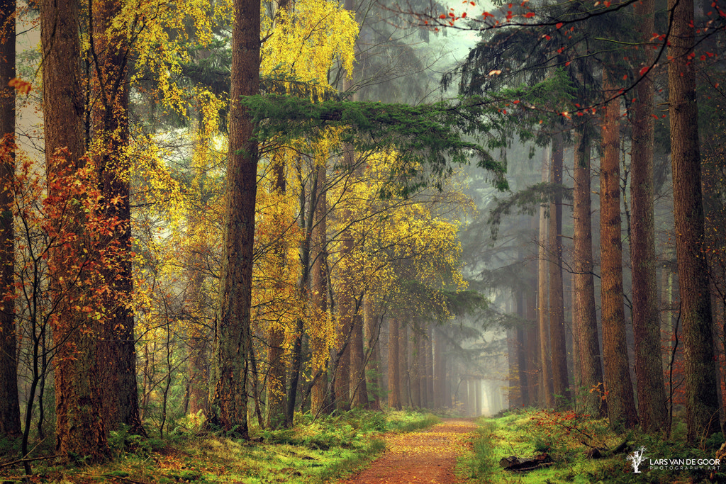 Photograph colors of the forest by Lars van de Goor on 500px