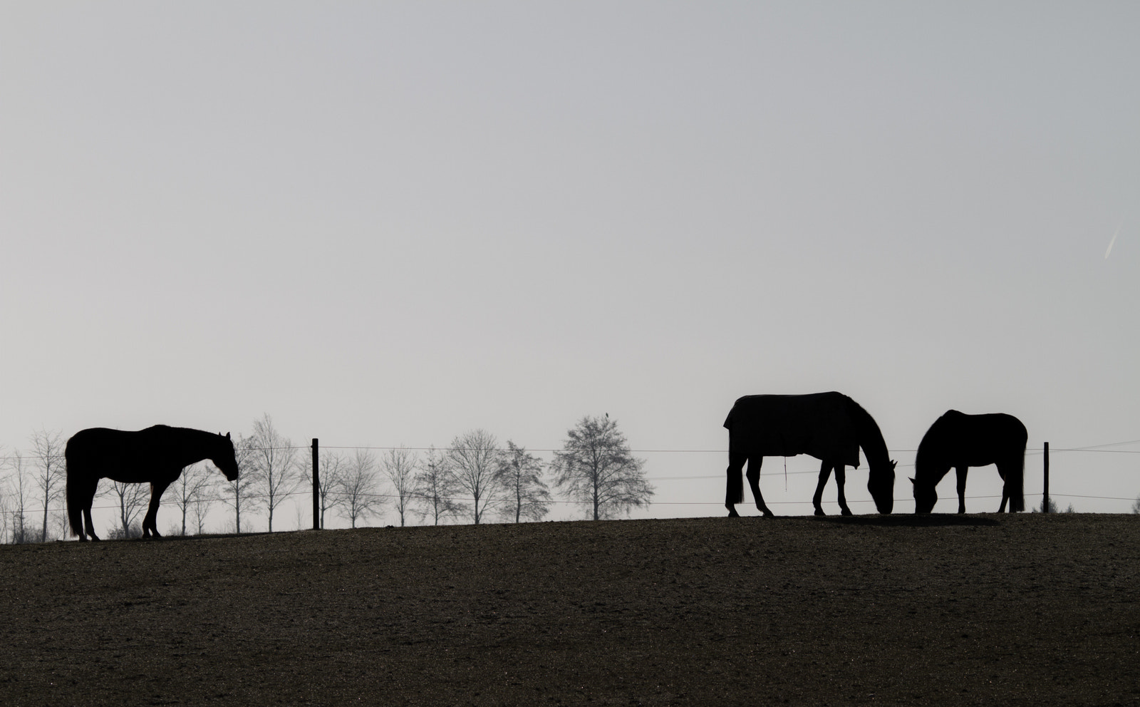 Photograph Horses by Philipp K on 500px