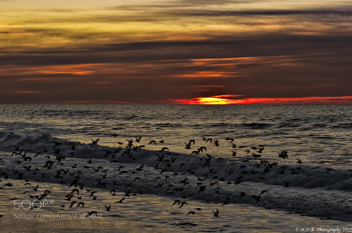 Photograph Dawn Flight by Harold Begun on 500px