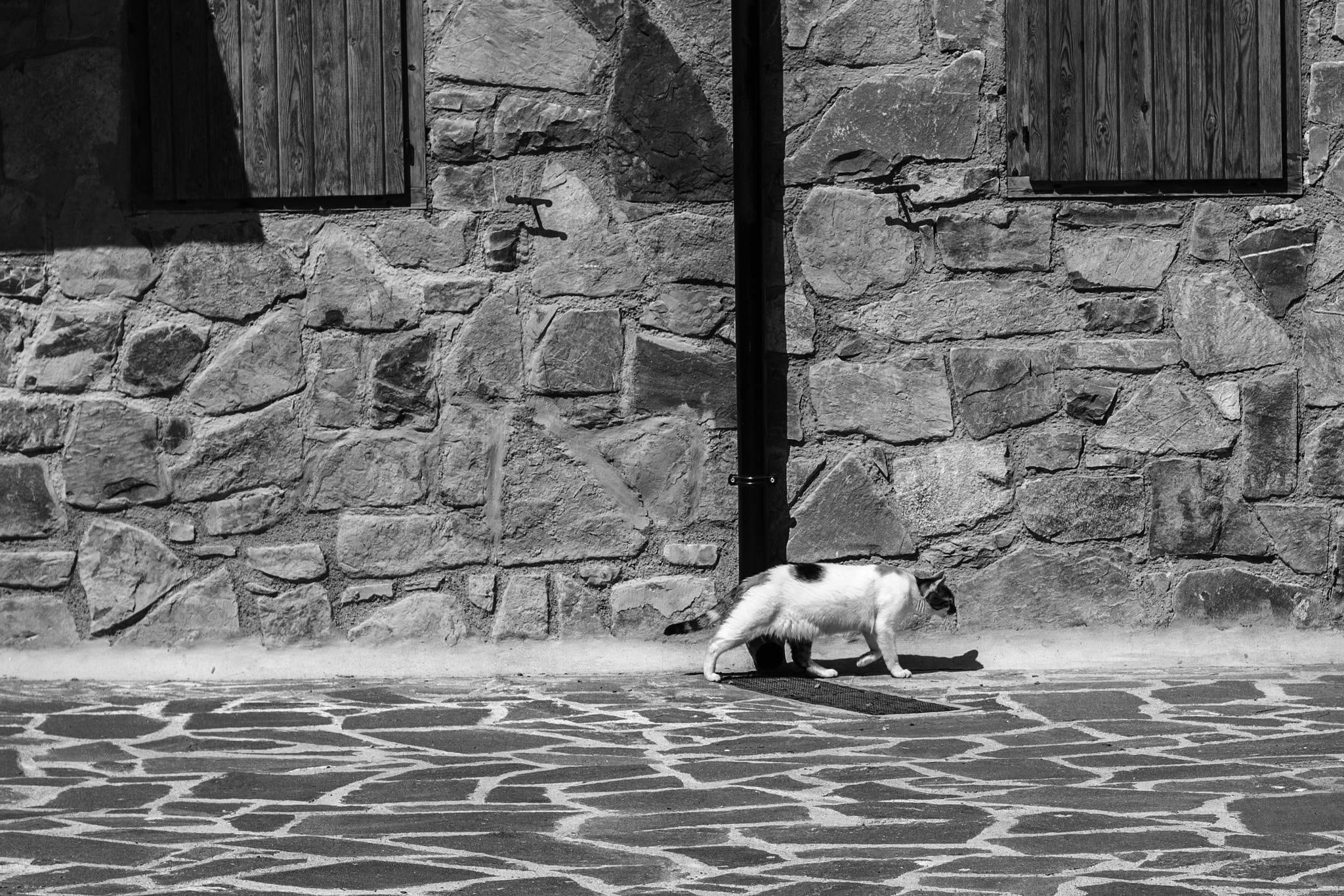 Photograph Sad cat by Rebeca Moncho on 500px