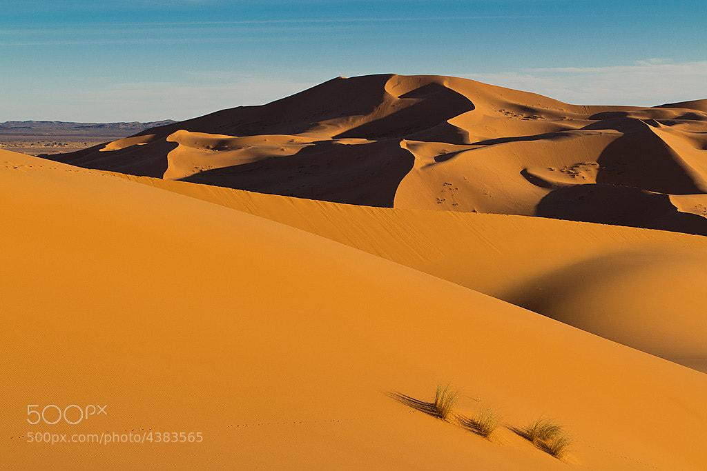 Photograph The Desert by Roman Jott on 500px