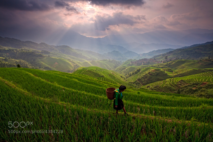 Photograph Longji Rice terrace by Helminadia Ranford on 500px
