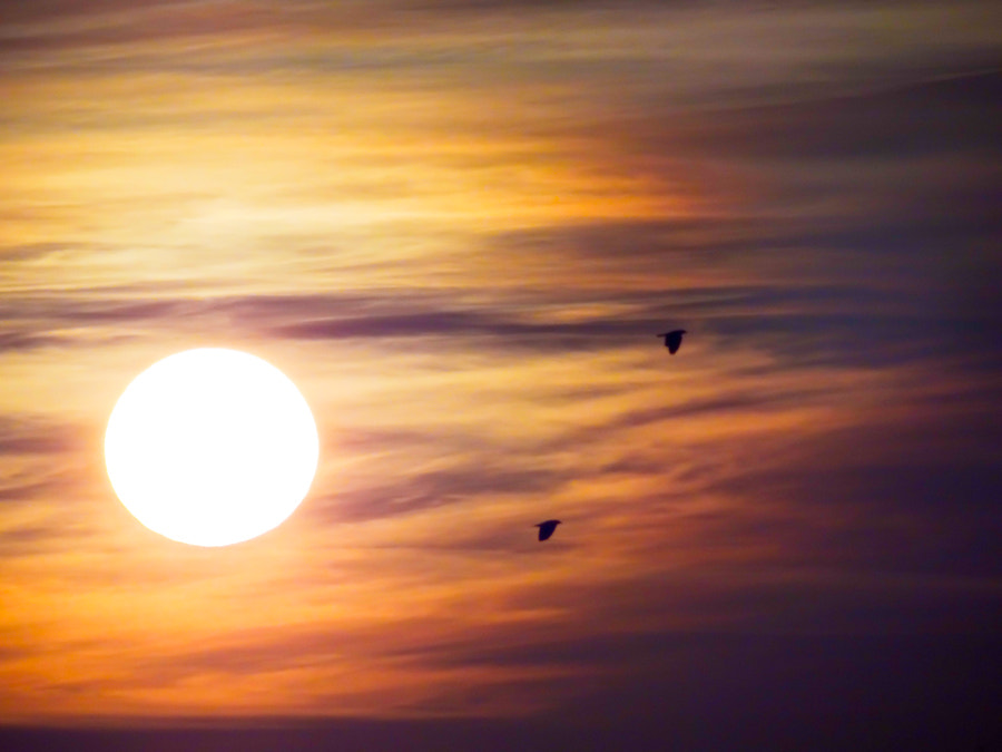 Photograph Birds of Sunrise by Jonathan Cox on 500px