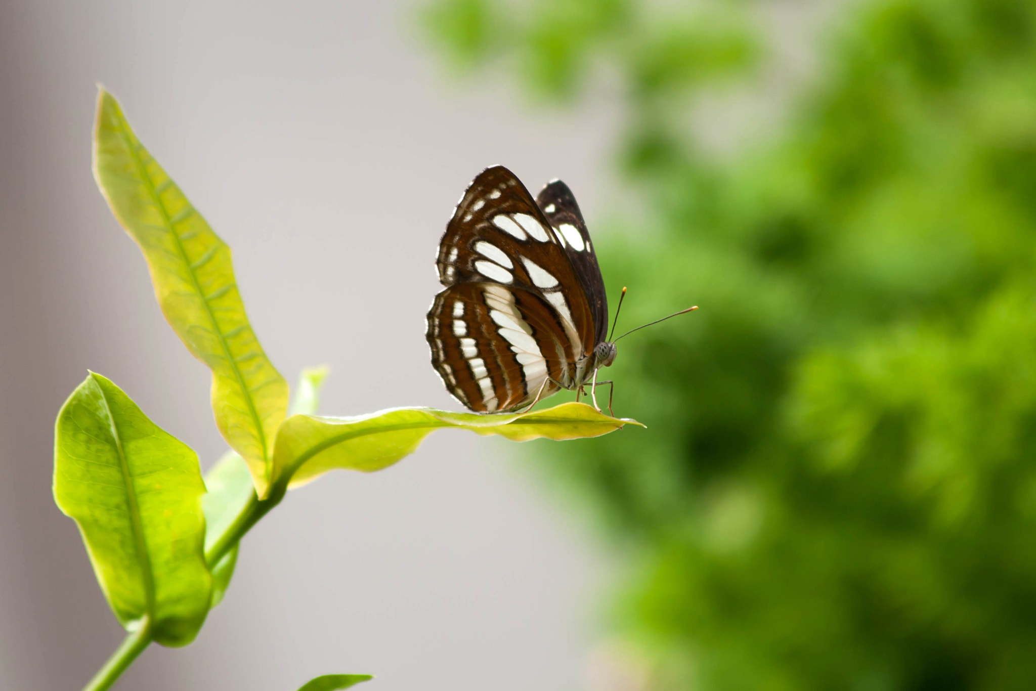 Photograph Butterfly by Marc Guille on 500px