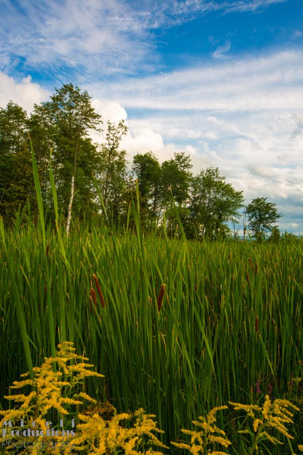 Ottowa Canada vegetation 2