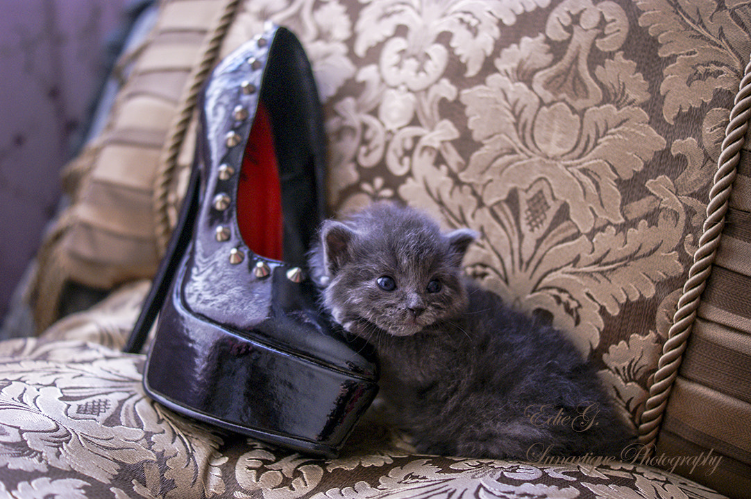 Photograph Kitten Heels by Edie G. on 500px