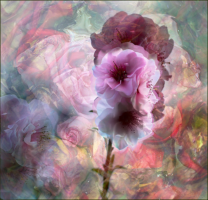 Photograph Flowers by Alla  Lora on 500px