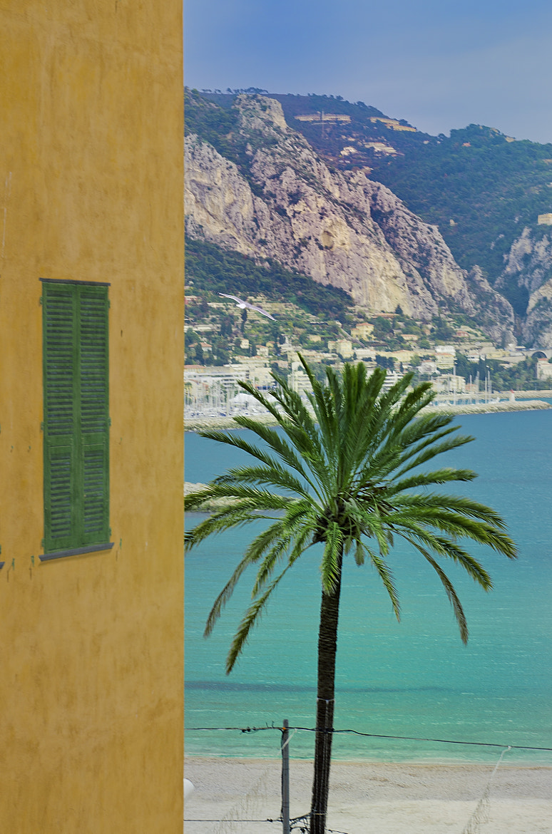 Photograph Palm Tree in Menton by Gilles Menghetti Gilles on 500px