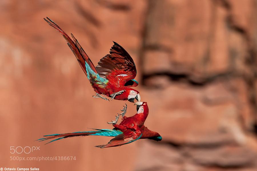 Aerial play by Octavio Campos Salles (octaviosalles) on 500px.com