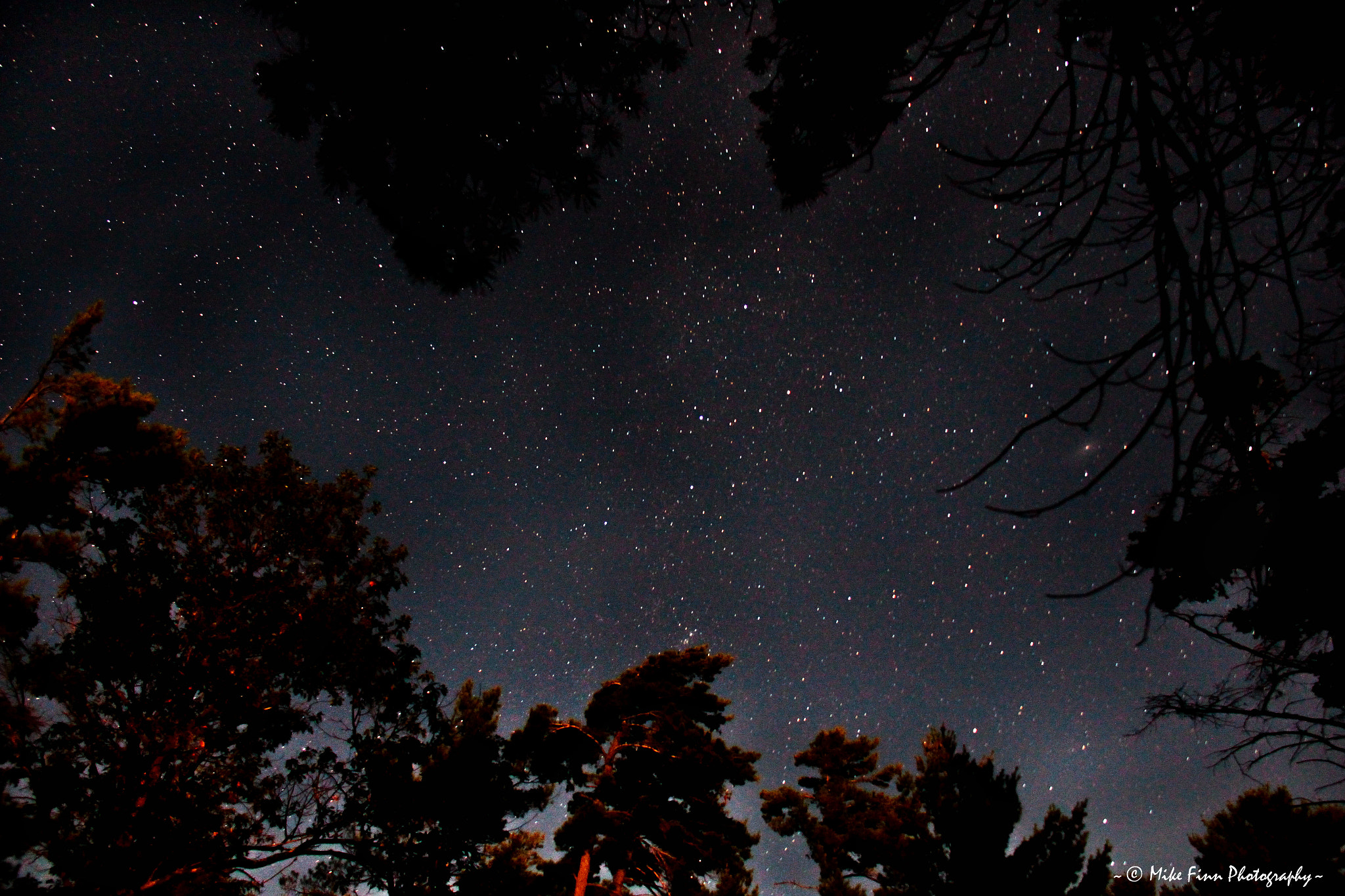 Photograph Andromeda in the trees by Mike Finn  Photography on 500px