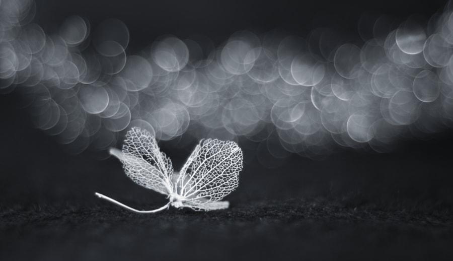 White fairy by Shihya Kowatari on 500px.com