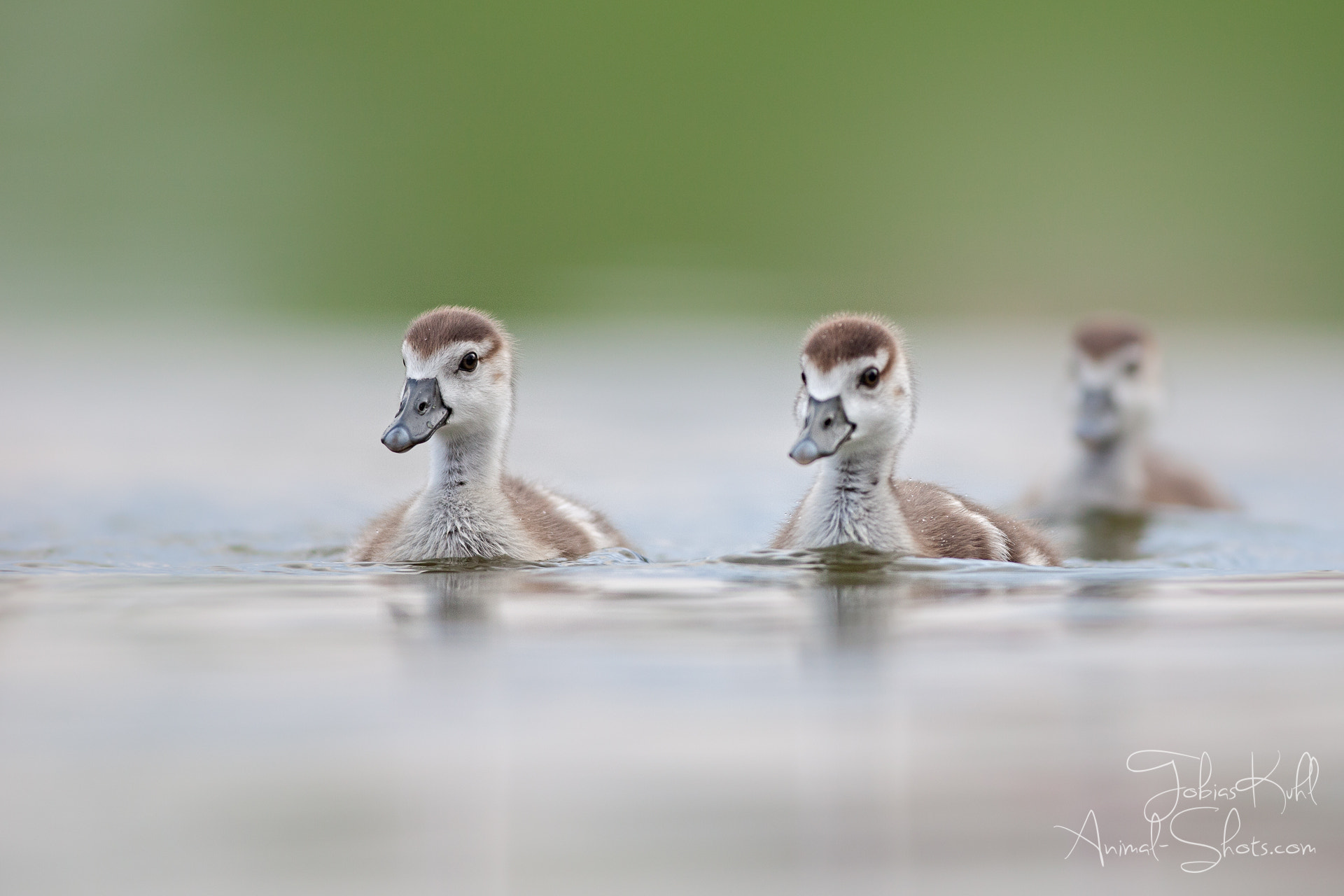Photograph Swim practice by Tobias Kuhl on 500px